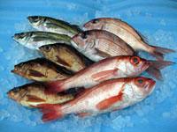 能登のうまい魚 贈答品