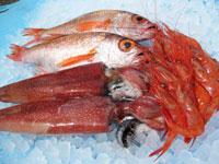 能登の旬の魚