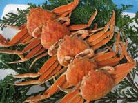 香箱蟹(メス蟹)